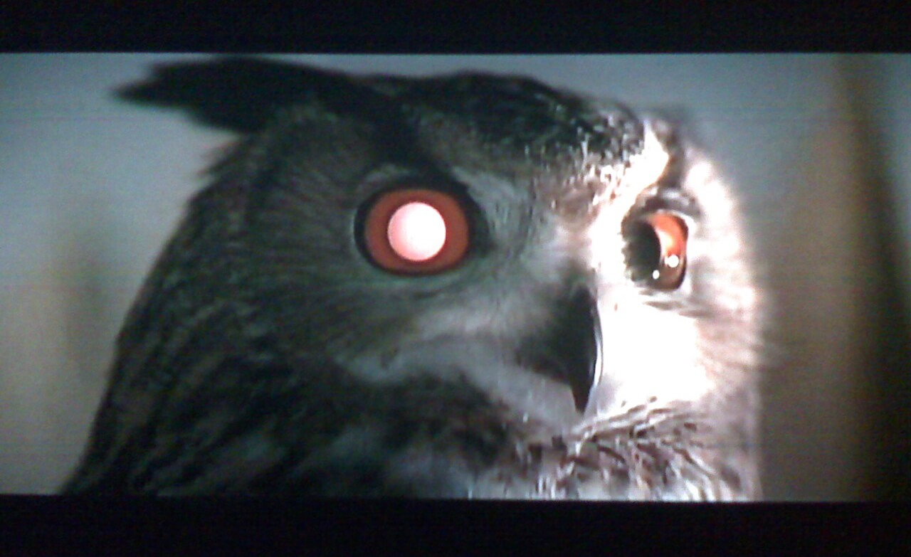 blade runner owl replicant or not